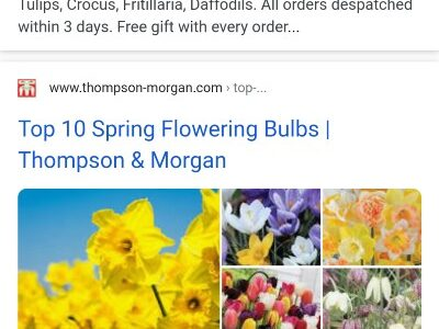 Organic results, for the search [spring bulbs]